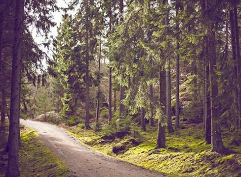 Skogen och hållbart skogsbruk