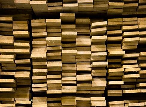 Träets fuktrörelser