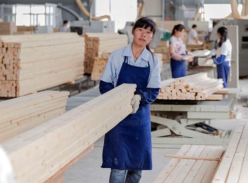 Svensk furu klarar höga krav från den kinesiska möbelindustrin