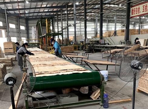 Teknik och miljö viktiga drivkrafter i kinesisk träproduktion